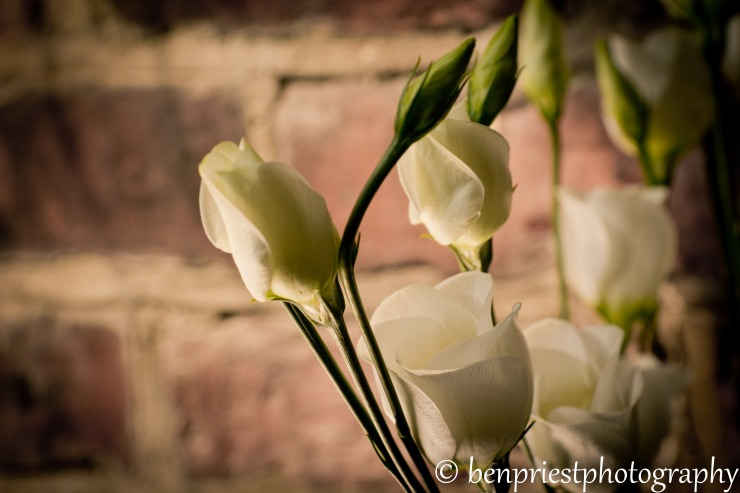 lisianthus weekly photo