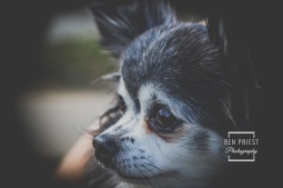 millie-the-dog-photographs-031