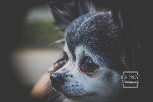 millie-the-dog-photographs-031