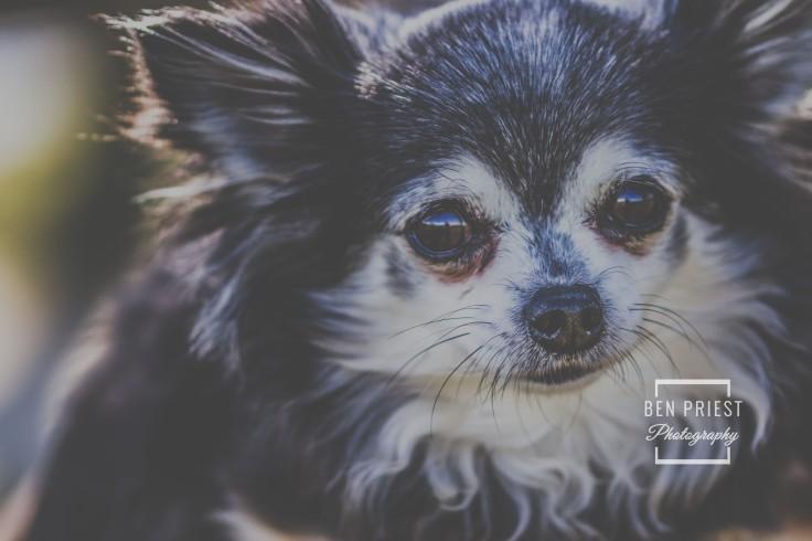 millie-the-dog-photographs-086