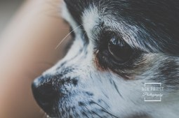 millie-the-dog-photographs-122