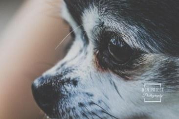 millie-the-dog-photographs-122