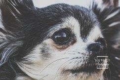millie-the-dog-photographs-134