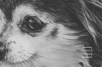 millie-the-dog-photographs-138